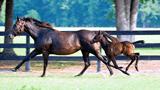 なぜ似た血統の馬ばかりになっても生産は困らないの