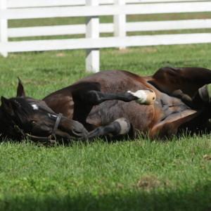【数撃てば中る】種牡馬として成功する競走馬とは