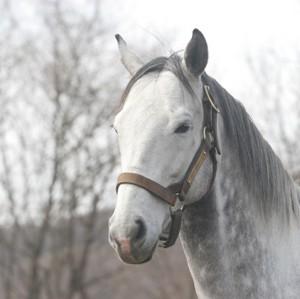 歴代最強のスタミナを持つ馬は