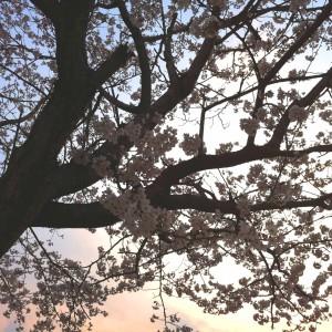 思い出に残っている桜花賞