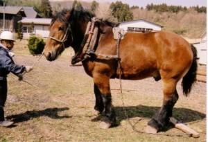 アスコットにダート馬を連れて行こう