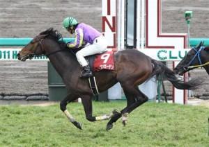 名障害馬ゴーカイの産駒オープンガーデンが引退、乗馬に