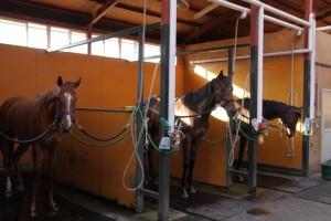 この厩舎といえばこの馬