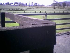 凱旋門賞馬カーネギー(牡21)が死亡、産駒にカーネギーダイアン・ホオキパウェーブ
