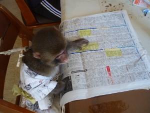 岩田が新聞配達している