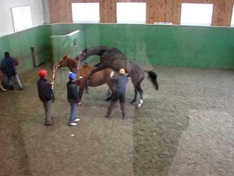 """""""世界ランク1位"""" ジャスタウェイが引退式 福永騎手「この馬の子どもでまた驚かせたい」"""