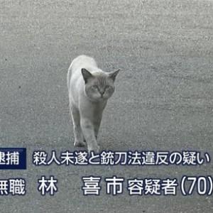 菊 花 賞 馬 ネ コ タ イ シ ョ ウ