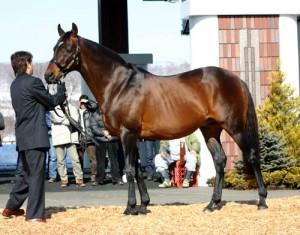 大種牡馬オペラハウス種牡馬引退