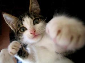 【競馬】宝塚記念は逃走するネコに注意せよ! ネコパンチ、早くも逃げ宣言 星野師「行くしかねえだろ」