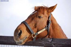 livejupiter 1605523949 12701 300x199 - 【疑問】 競走馬って何食べてるの?普通の馬みたいに人参食べてるの?
