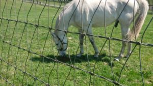 livejupiter 1605523949 20201 300x169 - 【疑問】 競走馬って何食べてるの?普通の馬みたいに人参食べてるの?