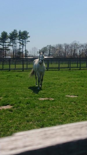 livejupiter 1605523949 22902 300x533 - 【疑問】 競走馬って何食べてるの?普通の馬みたいに人参食べてるの?