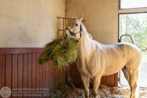 livejupiter 1605523949 23301 300x200 - 【疑問】 競走馬って何食べてるの?普通の馬みたいに人参食べてるの?