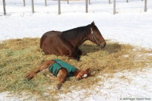 livejupiter 1605523949 27701 300x200 - 【疑問】 競走馬って何食べてるの?普通の馬みたいに人参食べてるの?