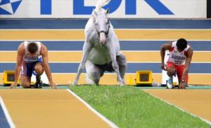 livejupiter 1605523949 5301 300x183 - 【疑問】 競走馬って何食べてるの?普通の馬みたいに人参食べてるの?