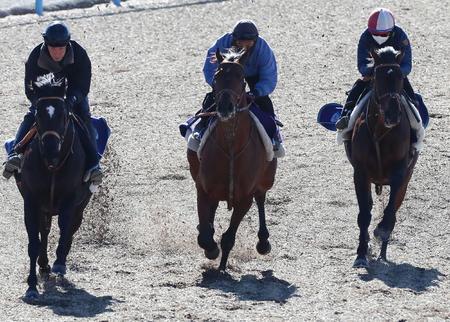 カフェファラオ(中央)は美浦ウッドを3頭併せで追い切られた(撮影・丹羽敏通)(Nikkan Sports News.)