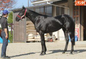 keiba 1614240529 14501 300x208 - 【競馬】キャロットFの3歳ドゥラメンテ産駒が全頭早期骨折した件