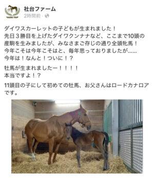 keiba 1619512551 101 300x347 - 【朗報】ダイワスカーレット、ついに牡馬を産み落とす