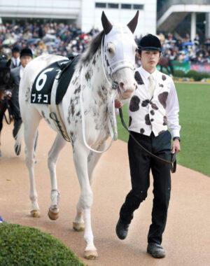 news 1629621956 2501 300x380 - 【競馬】純白の女傑が札幌に舞う 白毛の桜花賞馬ソダシが3歳牝馬7年ぶり札幌記念V 秋華賞へ視界良好