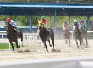 newsplus 1628655280 101 300x219 - 【地方競馬】笠松競馬で馬が走る演習