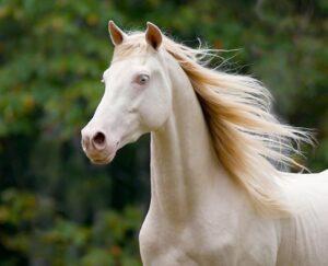 livejupiter 1634080731 12601 300x243 - 【競馬】ソダシ、写真集を発売。貴重なプライベートショットも