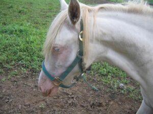 livejupiter 1634080731 12602 300x225 - 【競馬】ソダシ、写真集を発売。貴重なプライベートショットも