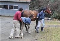 スイープトウショウ、ステイゴールドの牡馬を出産!