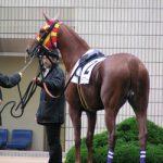 大魔神「この馬、尻尾なくてかわいい!子供全部買う」 →ヴィルシーナ、ヴィブロス、シュヴァルグラン