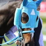 長山オーナー「今後は武豊のスケジュール次第でレースを決める。豊はこの馬に乗らなけらばいけない使命だよ。」