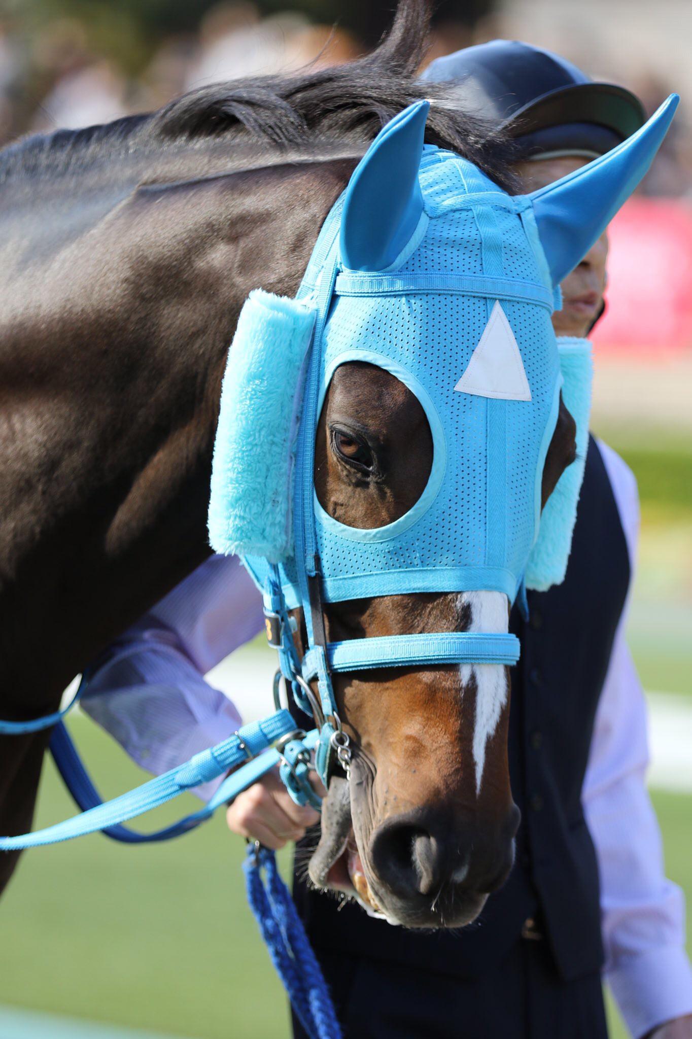 keiba 1541296202 16801 - 長山オーナー「今後は武豊のスケジュール次第でレースを決める。豊はこの馬に乗らなけらばいけない使命だよ。」