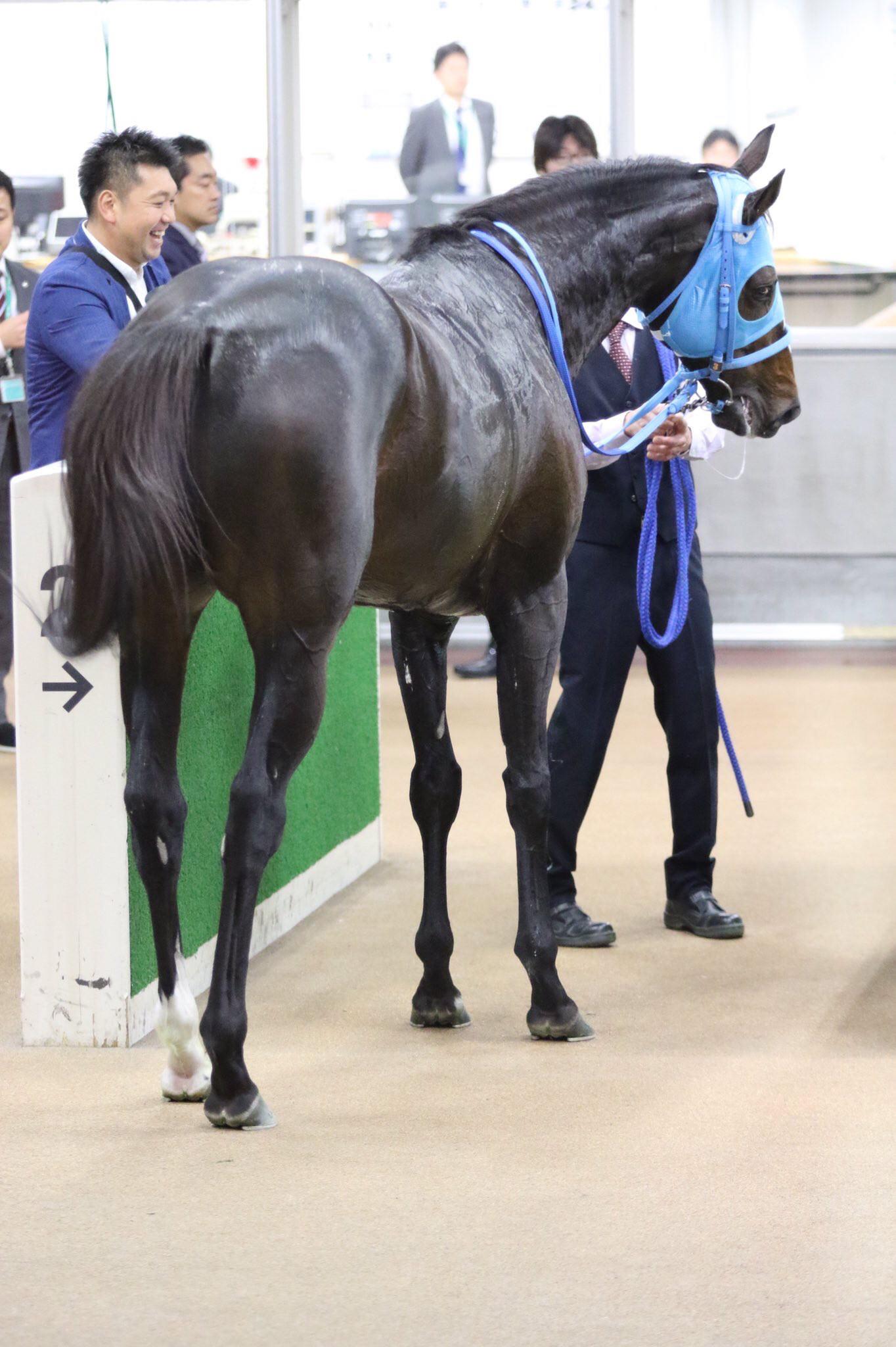 keiba 1541296202 16802 - 長山オーナー「今後は武豊のスケジュール次第でレースを決める。豊はこの馬に乗らなけらばいけない使命だよ。」