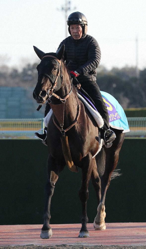 keiba 1585722027 1601 - オーシャンS 4年連続2着のナックビーナスが引退、繁殖牝馬に