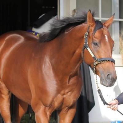 G1馬スピルバーグが引退 藤沢調教師「潮時かな」