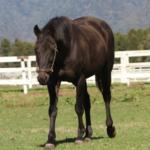 朝日杯馬エルウェーウィン死亡。 ビワハヤヒデのライバル。