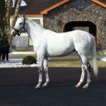 馬産地各所で種牡馬展示会 エイシンヒカリやゴールドシップ、ラブリーデイなど登場