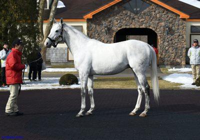 mnewsplus 1487335929 1301 400x280 - 馬産地各所で種牡馬展示会 エイシンヒカリやゴールドシップ、ラブリーデイなど登場