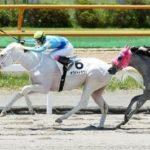 【函館4R】ホワイトドラゴンV、白毛の外国産馬で初