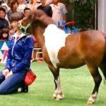 菜七子騎手「キタサンブラックに乗ってみたい」ファンイベントでグッズが11万円超で落札