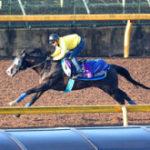 【富士S】イスラボニータが3頭併せで追い切り 栗田博師「良馬場でやりたい」