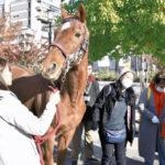 菊花賞馬も登場「競走馬の余生考える」イベント…引退馬の多くは食肉処理、飼育は一部にとどまる