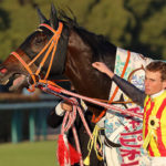 弘法は筆を、ムーアは馬を選ばず。チャンピオンズCを制した超瞬発力。