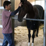 キセキ左前脚と臀部に感染症 他馬と隔離されて調整
