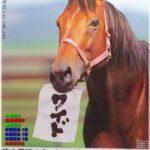 満30歳のナイスネイチャを支援するキャンペーンが実施中 有馬記念で3年連続3着