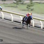 【動画あり】10/13新潟競馬で珍事! 騎手が距離を間違え、ムチ連打→減速し、惨敗! 騎乗停止。