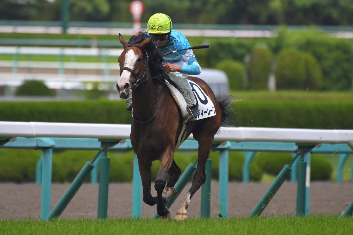 mnewsplus 1560590733 3301 - JRA最少馬体重優勝記録更新!メロディーレーンが馬体重340kgで9馬身差圧勝…6/15阪神6R・3歳未勝利