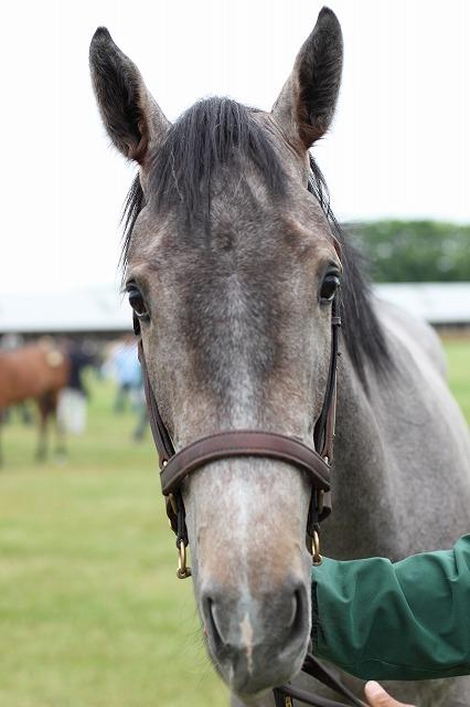 mnewsplus 1562207617 15901 - 「幻のダービー馬」 タンタアレグリア 調教中に脱臼と複雑骨折を発症し、予後不良