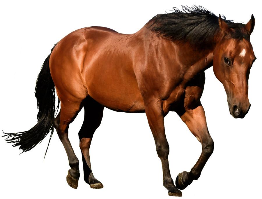 mnewsplus 1562301721 101 - 厩舎周辺に落ちてたタバコを食べちゃった可能性のある馬、無念の出走取消 =公正競馬保持のため