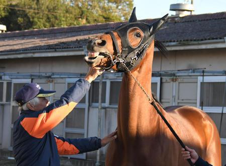 mnewsplus 1575972378 101 - G1・6勝馬「アーモンドアイ」 有馬記念出走確定、騎手はルメール