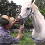 1989年のダービー馬ウィナーズサークルが老衰の為、死去 30歳
