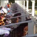 【G1】有馬記念 新世代の王者!唯一の3歳馬サトノダイヤモンド(ルメール)ゴール前の叩き合いを制しG1連勝!